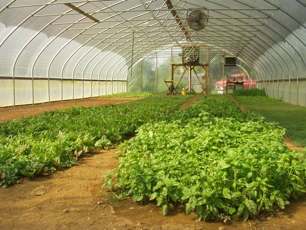 Shade cloth used in greenhouse protecting vegetables