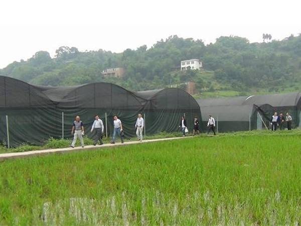 Black Shade cloth for agriculture
