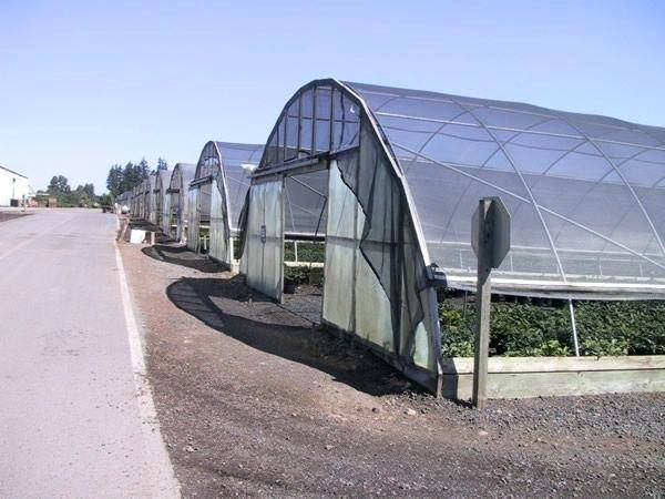 Green Shade Cloth Greenhouse Protects Crops