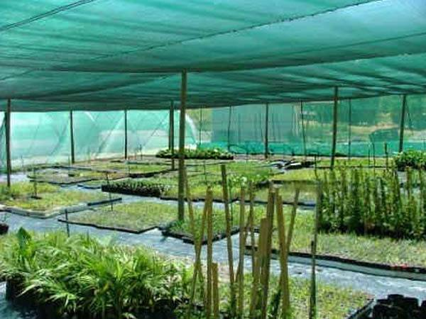 Shade cloth for plant in agriculture